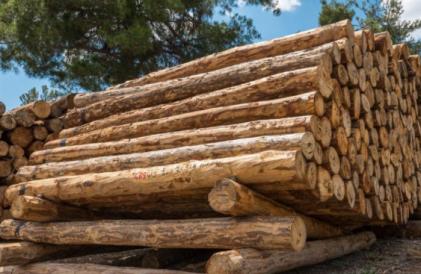 中欧班列助力驻港企业木材年均销售增长30%
